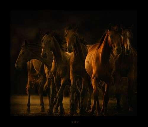 كل واحد يحط صورة حيوانه المفضل horses19.jpg